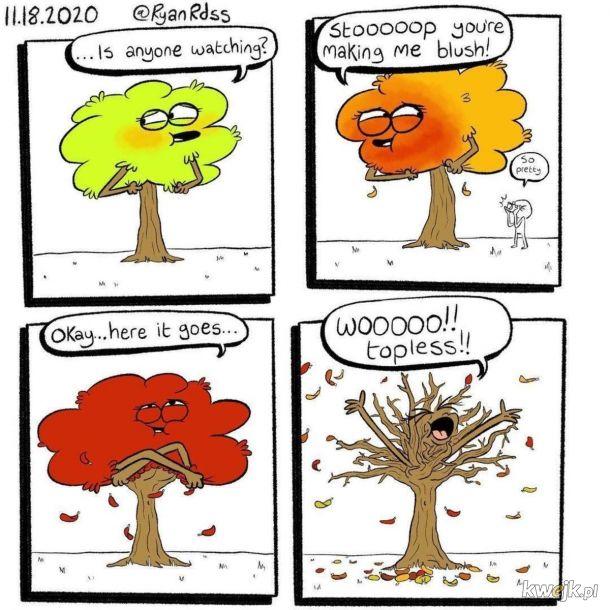 Ach te frywolne drzewa...