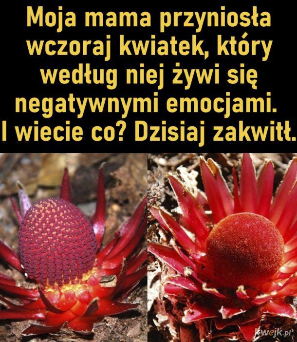 Kwiatek żywiący się negatywną energią