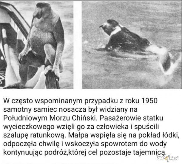 Historia pewnego nosacza
