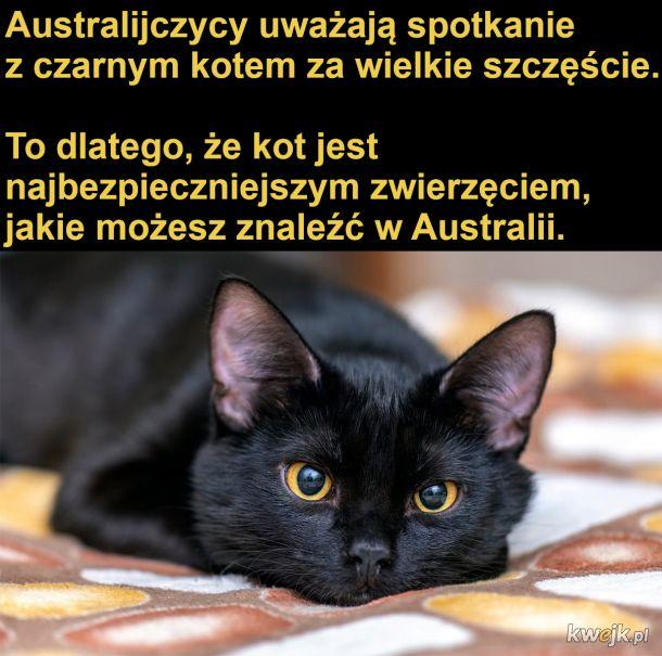Czarny kot = szczęście
