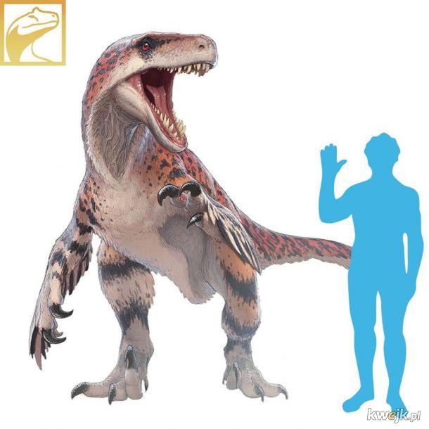 Utahraptor z rodziny dromeozaurów (by Fred Wieum)