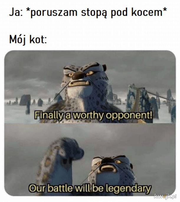 Kitku wojownik