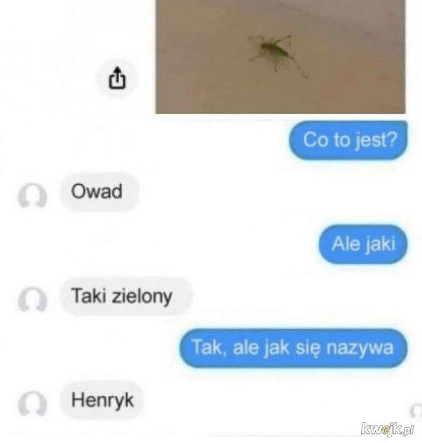 Nazwa owada