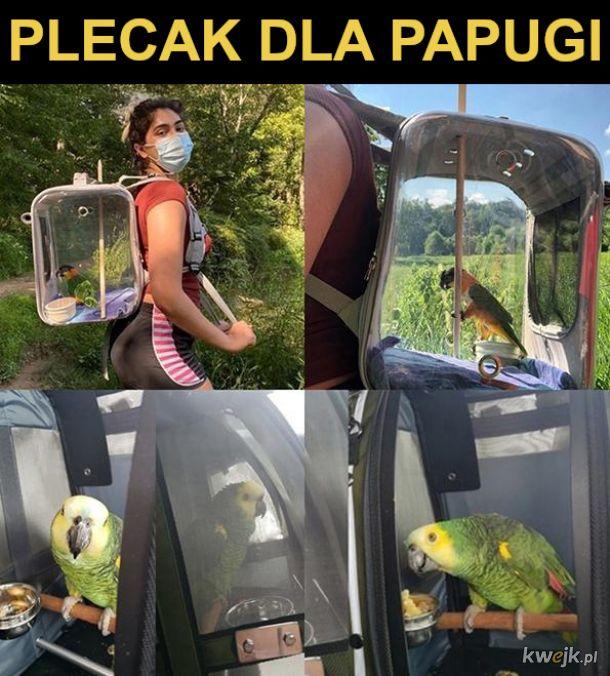Plecak dla papugi