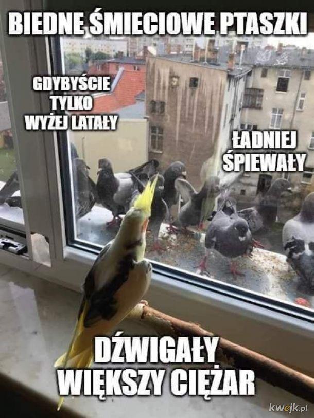 Śmieciowe ptaszki