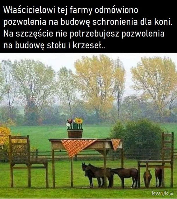 Stary cwaniak farmę miał, ija ija oo..