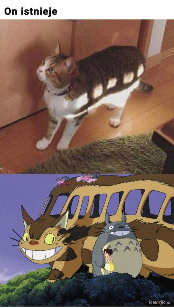 Legendarny kot.