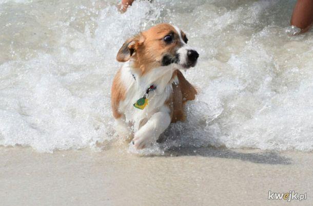 Trochę wody dla ochłody, czyli pieski, które nie lubią się kąpać