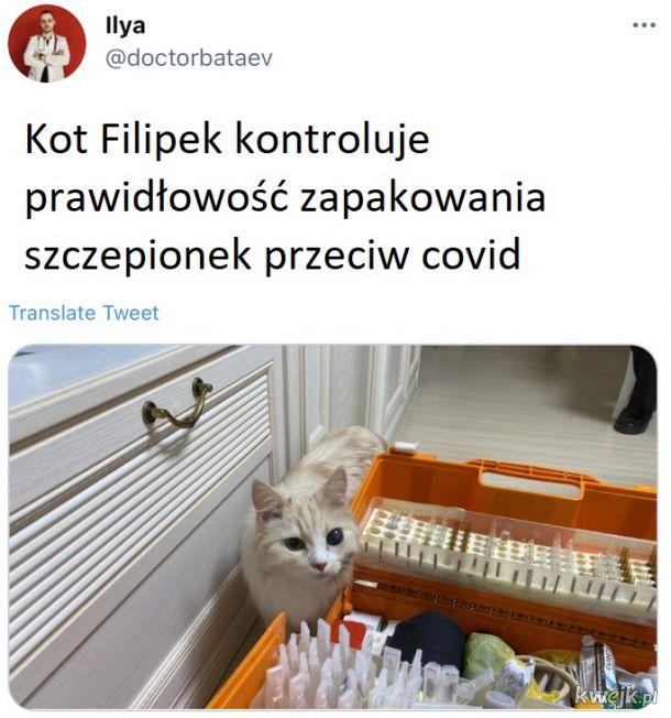 Kot sanitarny