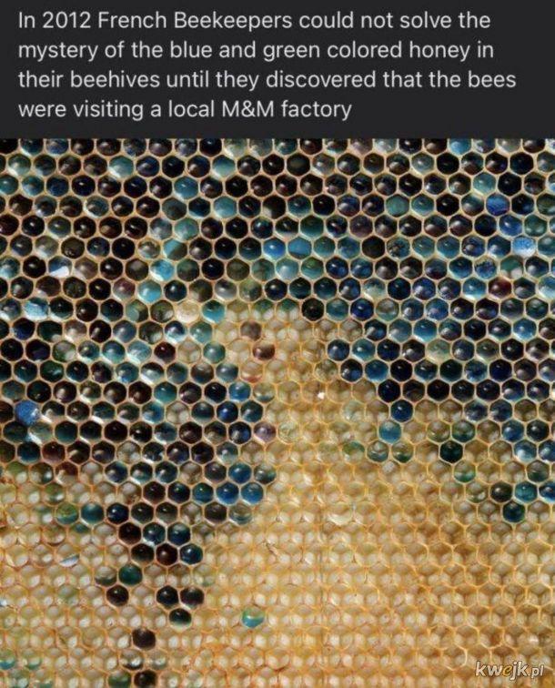 Pszczoły też lubią tęczę. M&Msową.