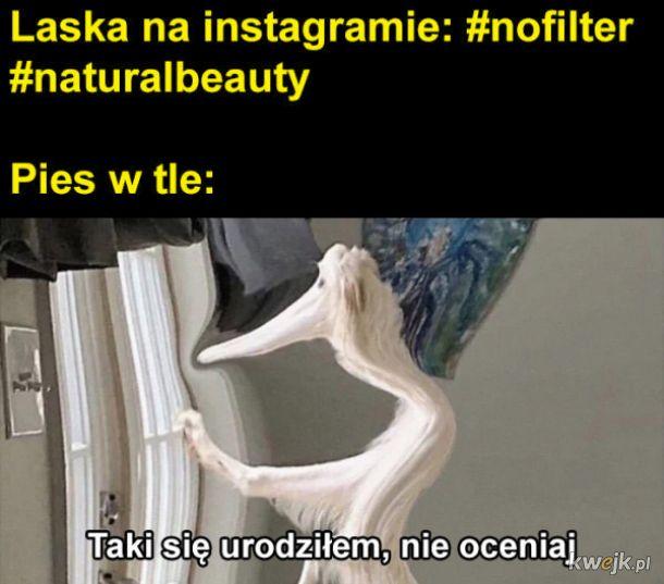 Laska na instagramie