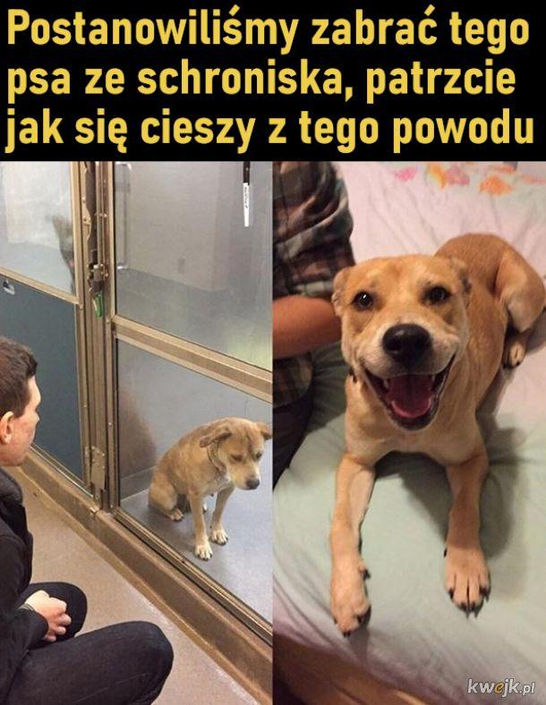 Szczęśliwy piesio