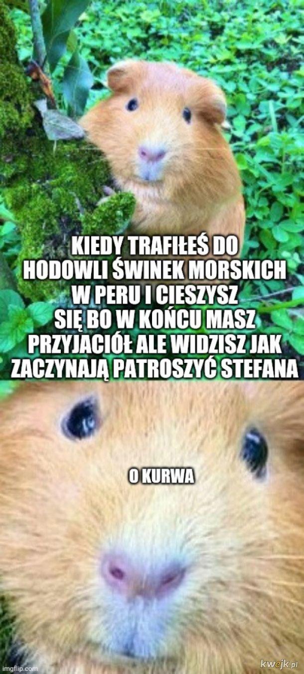 Kurde, Stefan uciekaj
