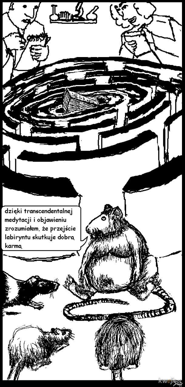 szczurzy budda