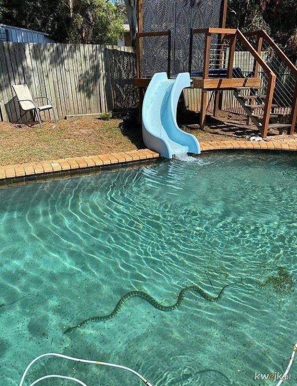 Brajanku, idź sobie popływać