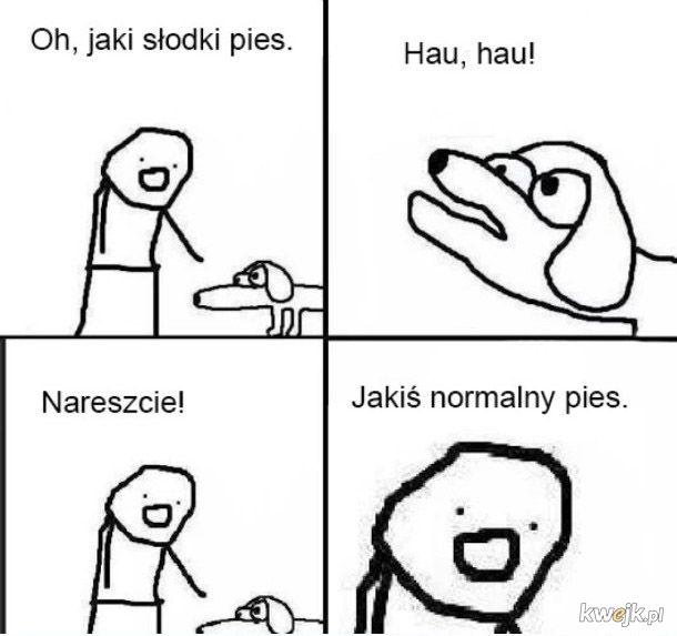 Słodki pies