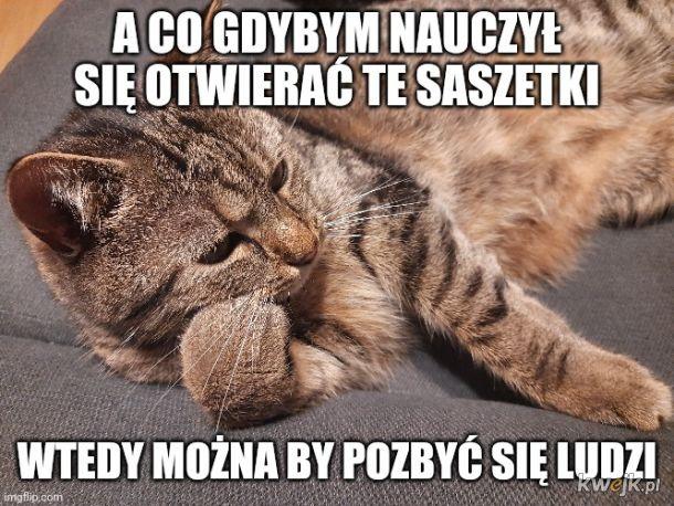 Kot myśliciel