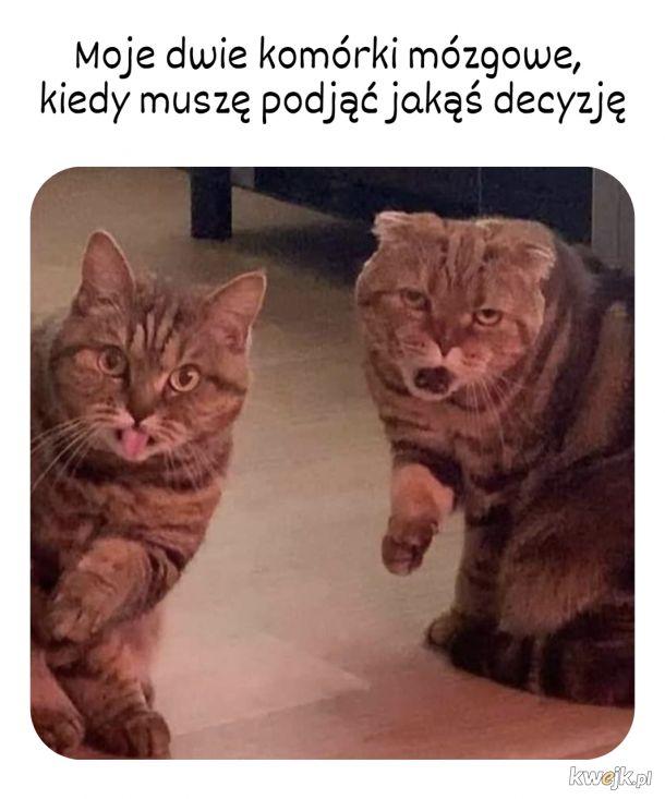 Yyyyy