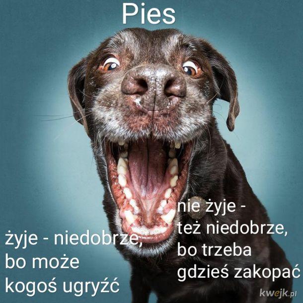 Pies - problem typu tragedia grecka