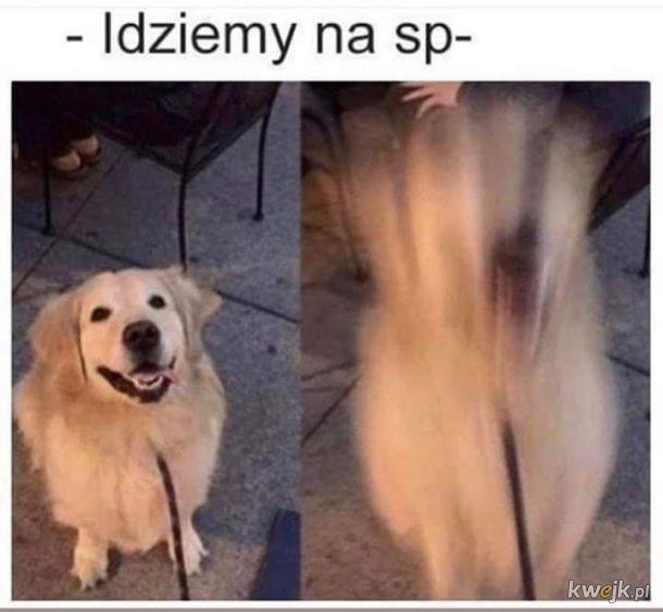 Spapapapapacer