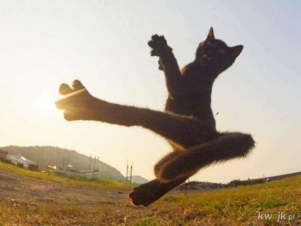 Karate Kitku
