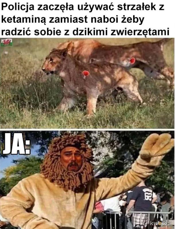 junky lion