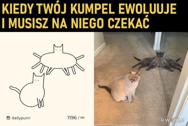 Ewolucja kitku