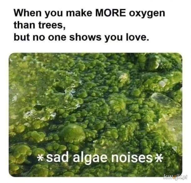 Kochajmy algi!
