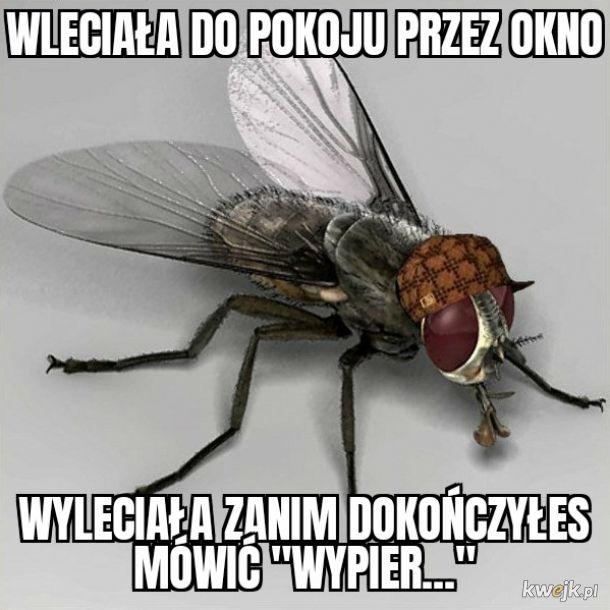 Dobry Ziomek Mucha