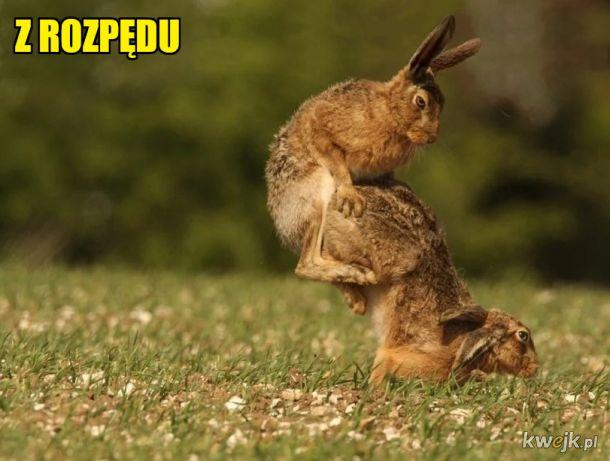 Szybki Lopez jakiś