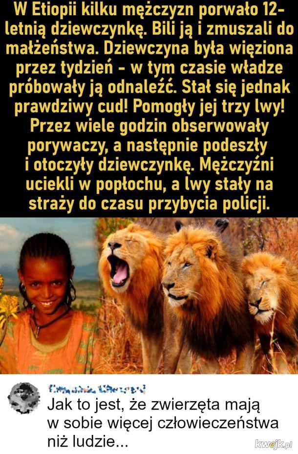 Lwy uratowały dziewczynkę