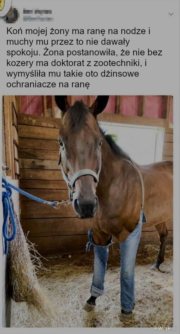 Jak konie nosiły by spodnie? oto odpowiedź