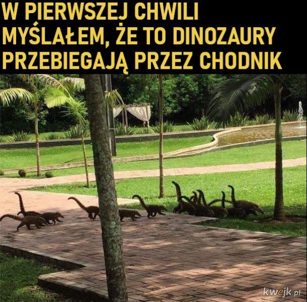 Małe dinozaury xD