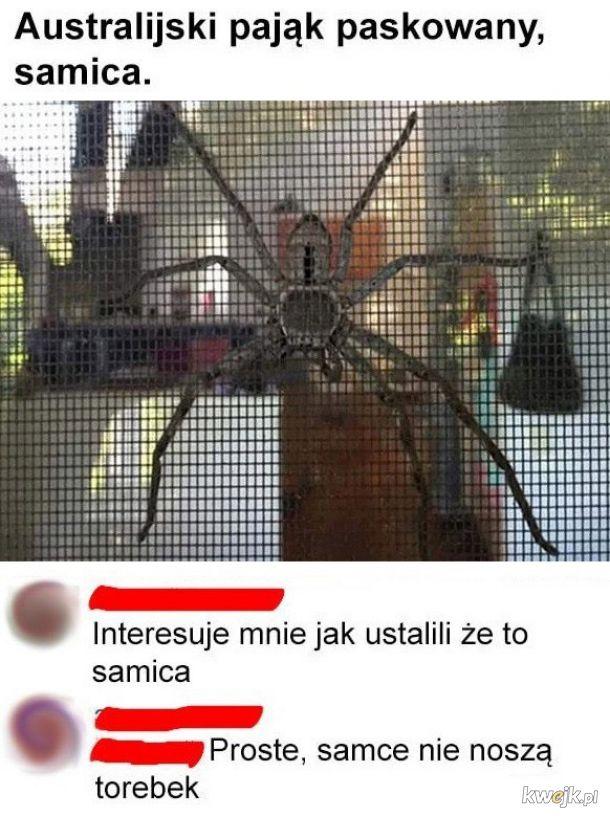 Australijski pająk