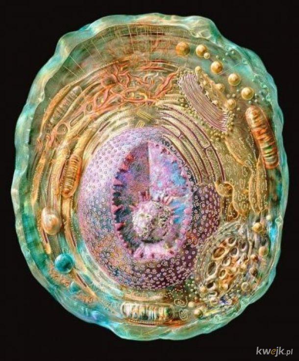 Najbardziej szczegółowy obraz komórki ludzkiej. Mikroskopia krioelektronowa