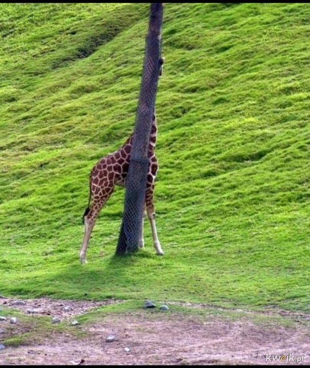 Zwierzęta, które próbują się ukryć