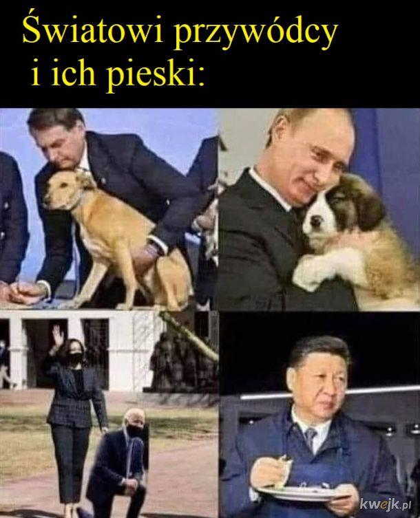 Hau hau, pies polityka