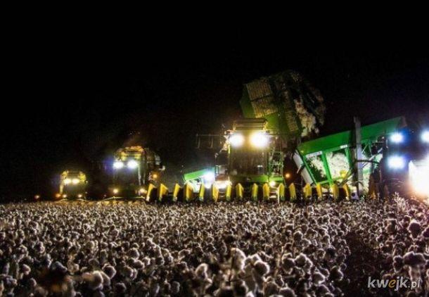 Koncert czy pole bawełny i kombajn?