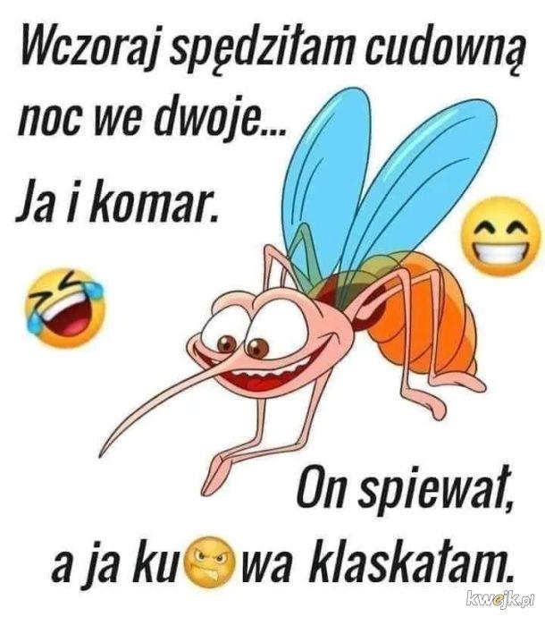 Komrzyca nie komar
