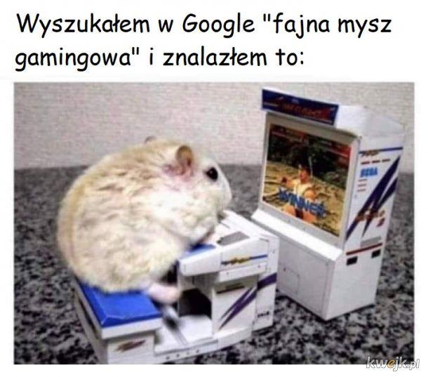 Trochę chomikowata ta mysz