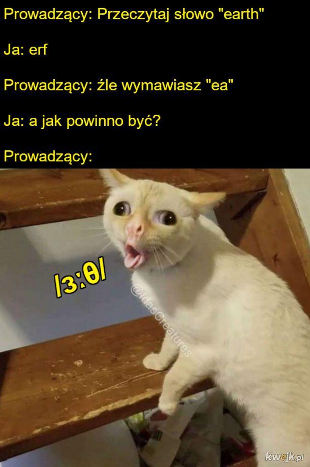 Porządna nauka języka