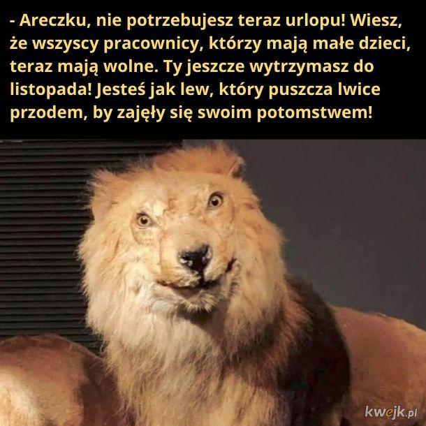 Areczek jest jak lew!