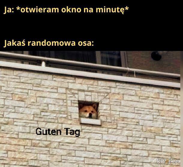 """""""Guten Tag"""", bo mam podejrzenie, że te osy są narodowości niemieckiej"""