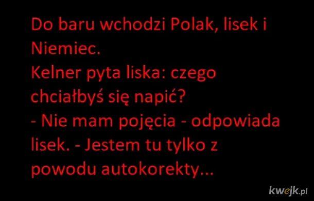 Lisek