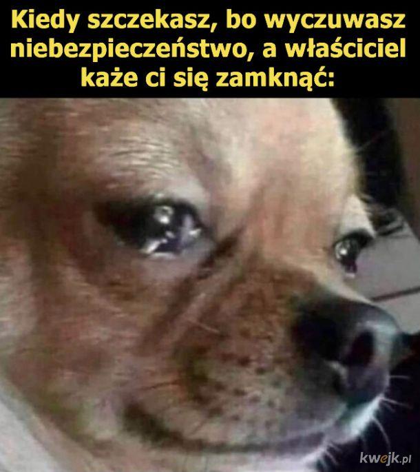 Niezrozumiany pies