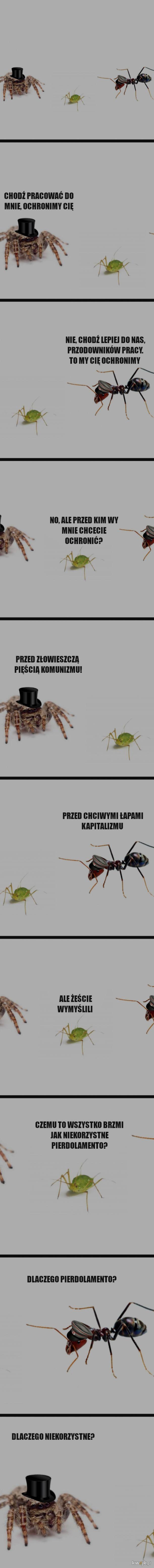 Mrówka, Pająk i Mszyca