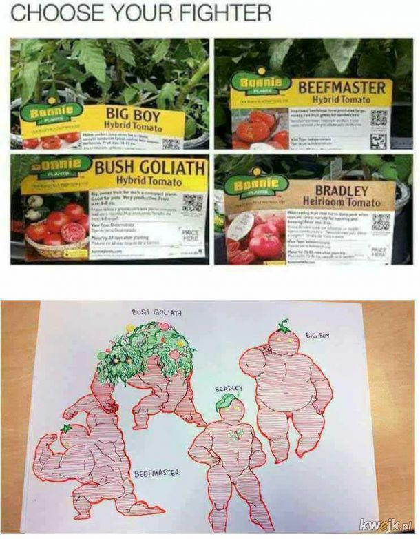 Gatunki pomidorów.