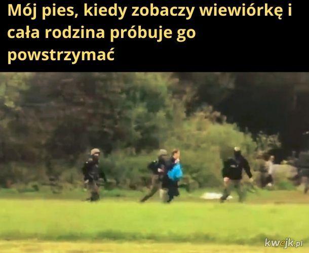 Polish naruto run