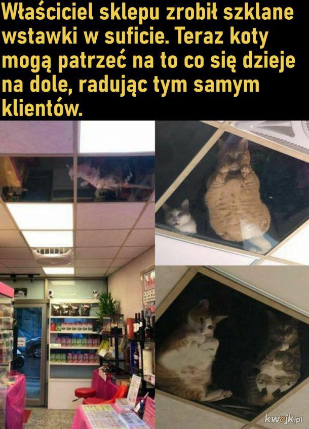 Koci monitoring