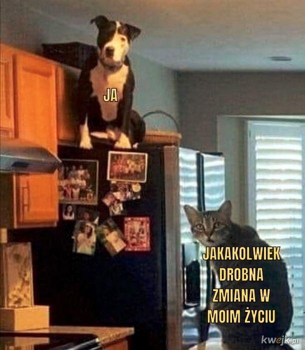 Koteł to nie taka drobna zmiana